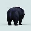 07 28 33 889 wild bear 04 4
