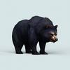 07 28 35 15 wild bear 05 4