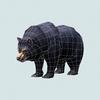 07 29 40 338 wild bear 06 4