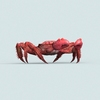07 33 08 171 christmas island red crab 05 4