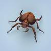 07 40 26 397 fantasy monster bug 01 4