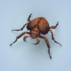Fantasy Monster Bug 3D Model