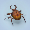 07 40 26 495 fantasy monster bug 03 4