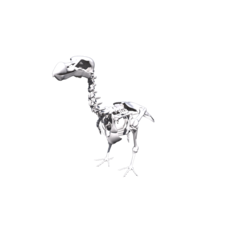Dodo Skeleton 3D Model