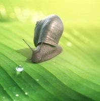 snail 0.0.1 for Maya