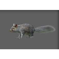 squirrel 0.0.1 for Maya