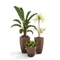 House Plants 2 3D Model