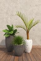 House Plants 3 3D Model