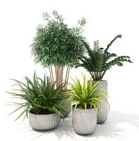 House Plants 4 3D Model