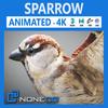 17 49 45 200 sparrow 000 4