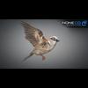 17 49 46 173 sparrow 03 4