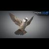17 49 46 204 sparrow 01 4