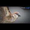 17 49 46 302 sparrow 02 4