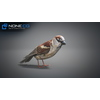 17 49 46 486 sparrow 07 4