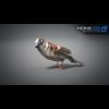 17 49 46 697 sparrow 08 4