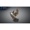17 49 47 0 sparrow 11 4