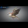17 49 47 150 sparrow 04 4