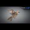 17 49 47 190 sparrow 12 4