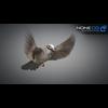 17 49 47 344 sparrow 09 4
