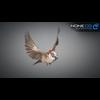 17 49 47 804 sparrow 15 4
