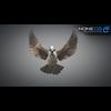 17 49 47 994 sparrow 05 4