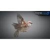 17 49 48 194 sparrow 17 4