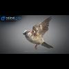 17 49 48 460 sparrow 18 4