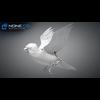 17 49 48 752 sparrow 18 wireframe 4