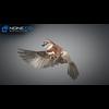 17 49 48 817 sparrow 14 4