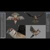 17 49 50 464 sparrow 18 viewports 4