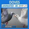 17 58 48 74 doves thumb 4