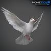 17 59 47 424 doves 006 4