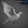 17 59 47 555 doves 004 4