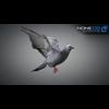 17 59 47 90 doves 003 4