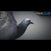 17 59 49 133 doves 001 4