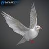17 59 49 629 doves 016 4