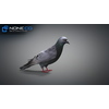 17 59 50 328 doves 019 4