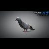 17 59 50 381 doves 021 4