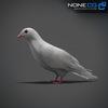 17 59 50 388 doves 022 4