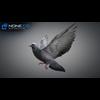 17 59 50 949 doves 027 4
