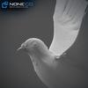 17 59 51 301 doves 028 4