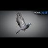 17 59 51 697 doves 031 4