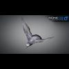 17 59 52 111 doves 033 4