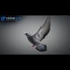 17 59 52 492 doves 035 4