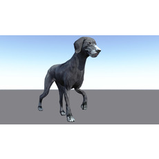 Walking cycle animated low poly model of a Labrador Retriever dog 3D Model