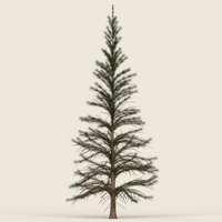 Game Ready Conifer Tree 01 3D Model