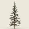 07 19 56 535 conifer tree 01 01 4