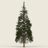 Game Ready Conifer Tree 02 3D Model
