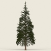 07 38 46 780 conifer tree 02 01 4