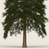 07 38 47 192 conifer tree 02 02 4